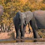 Only 57 jumbos out of 170 sold through Ministry's auction