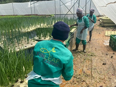 Agricultural financial services provider targets women and youth