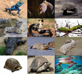 What are the consequences of smuggling reptiles? – Public talk to be hosted by Scientific Society